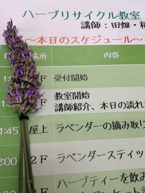 herb4.jpg