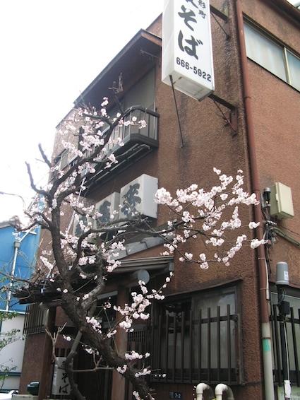 spring5.jpg