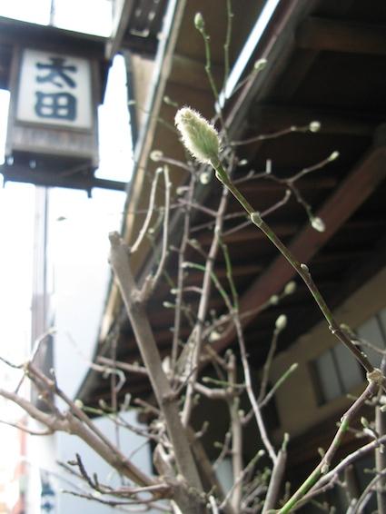 spring6.jpg