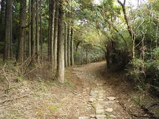箱根旧街道_2.JPG