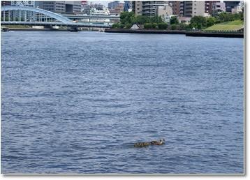 ⑨川渡り.jpg