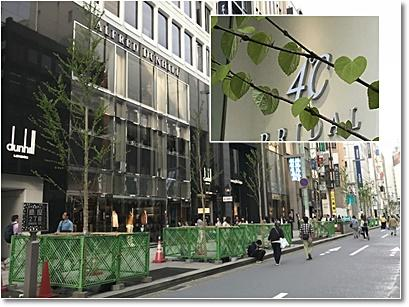 街路樹.jpg