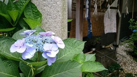 末廣神社_450.jpg
