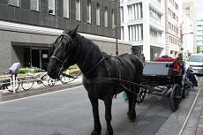 馬休養6-240.jpg