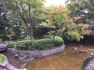 桜川屋上公園の紅葉.jpeg