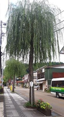 Yanagi-tate.jpg