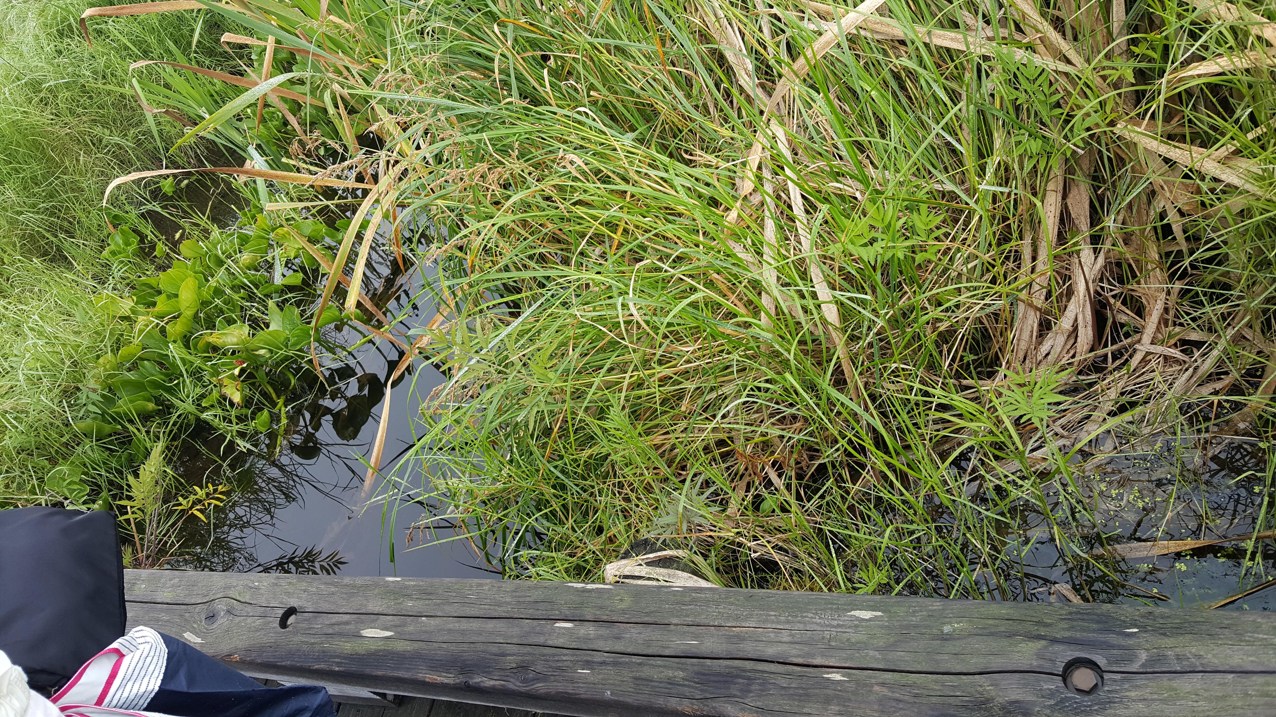 葦が生い茂る地 (家康が江戸を建てた頃) - 中央区観光協会特派員ブログ