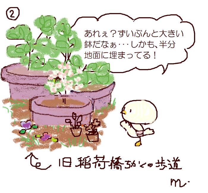 凑人! 2.凑的盆栽