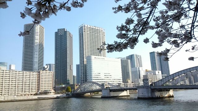On Sumida River terrace, taste of ancient city where cherry blossoms bloom beat against *