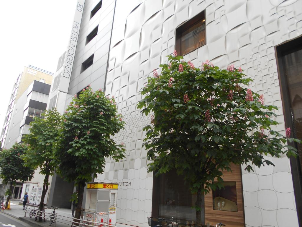 Flowers of Ginza-Maronie-dori St. middle of May horse chestnut which blooms on street of the north side of Ginza MATSUYA neatly are in full bloom