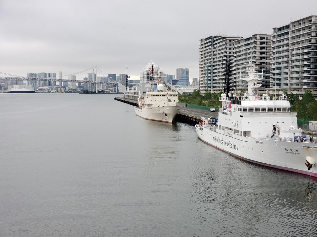 The white dragon-maru Hakuho-maru was anchoring in Harumi Wharf.