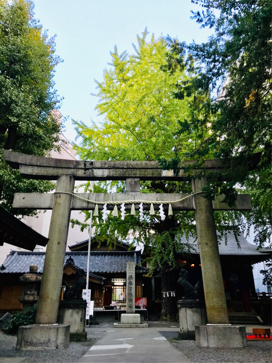 * Does 0 luck improve? Three selections of Shinto shrines where golden gingko nut wins