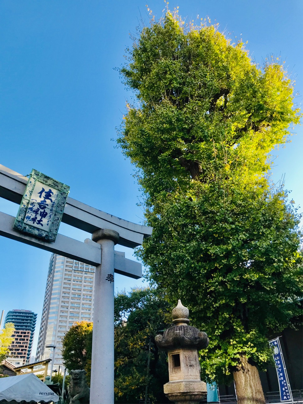 Does fanwise-topknot hairstyle - Sumiyoshi-jinja Shrine - 0 0 luck to grow erectly in the sky of Tsukuda improve? Three selections of Shinto shrines where golden gingko nut wins