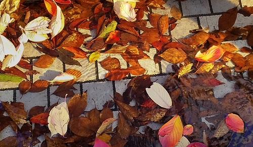在中央區小的秋天發現了!2