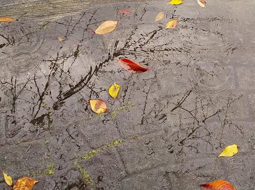 如果被雨走路的話中央區